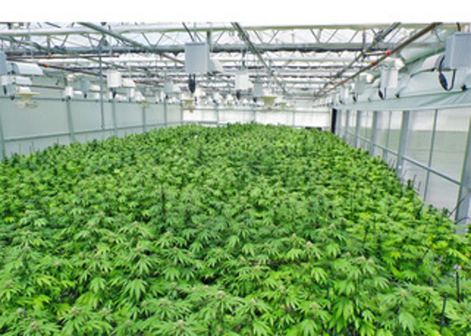 One of Solaris Farms' massive plant bays.
