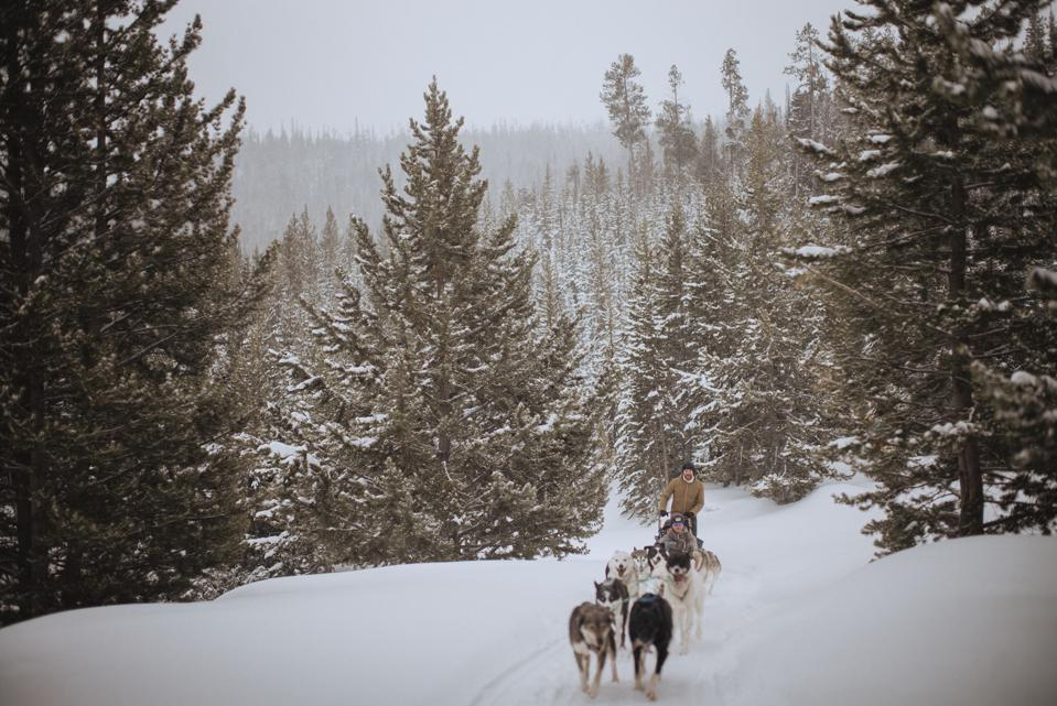 Dog Sledding Lone Mountain Ranch Big Sky Montana