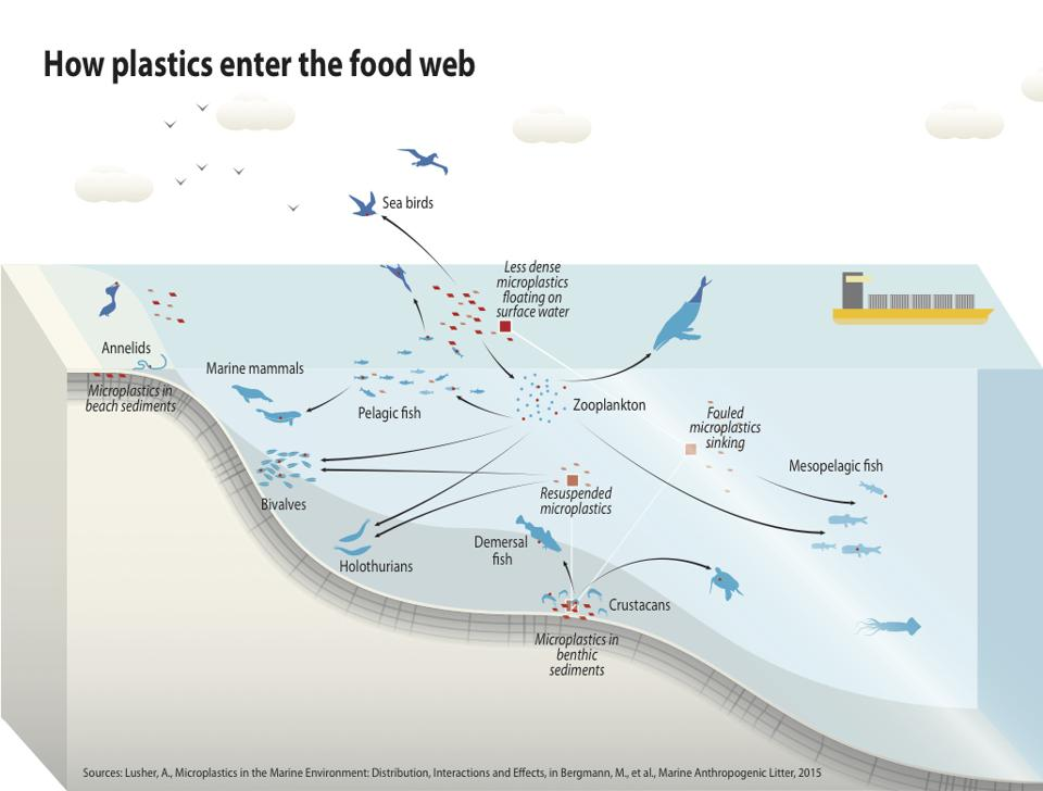 How plastics enter the food web