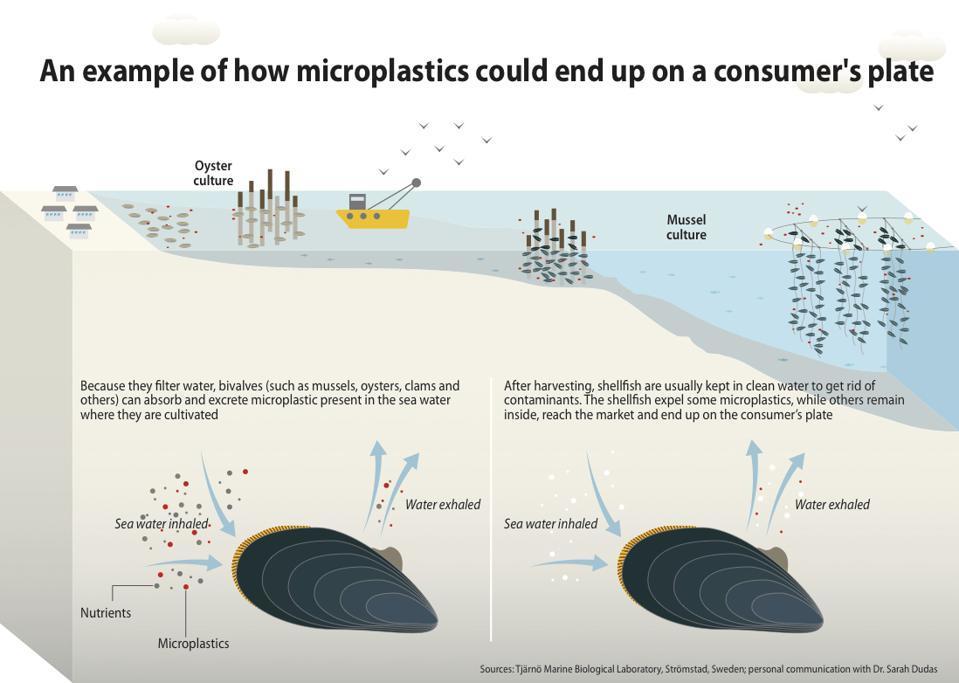 Microplastics in seafood