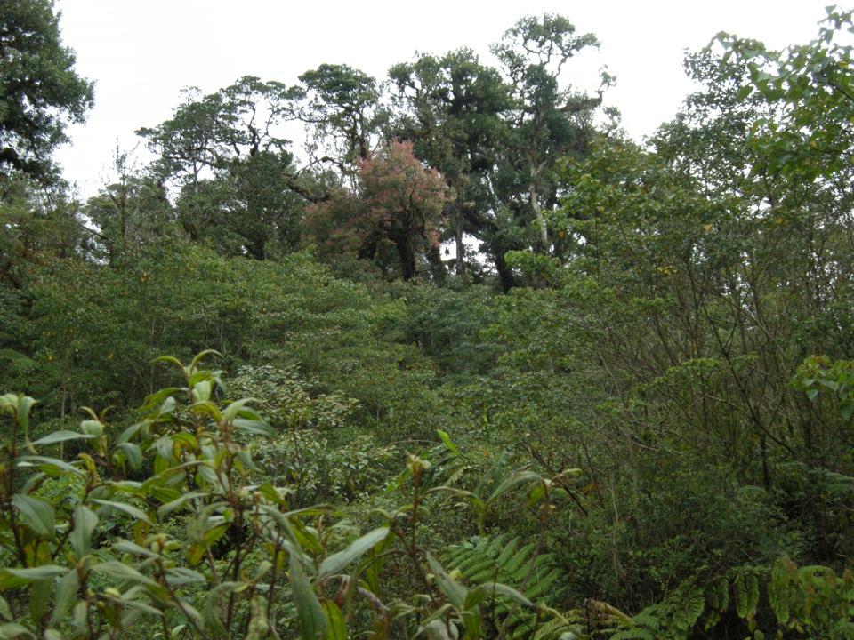 Bosque nuboso Taliabu Bram Demeulemeester