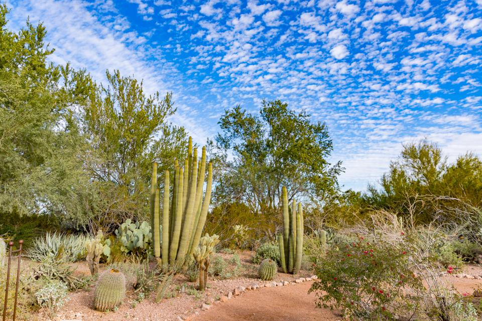 Scottsdale, AZ - A walk through one of the paths at the Desert Botanical Gardens