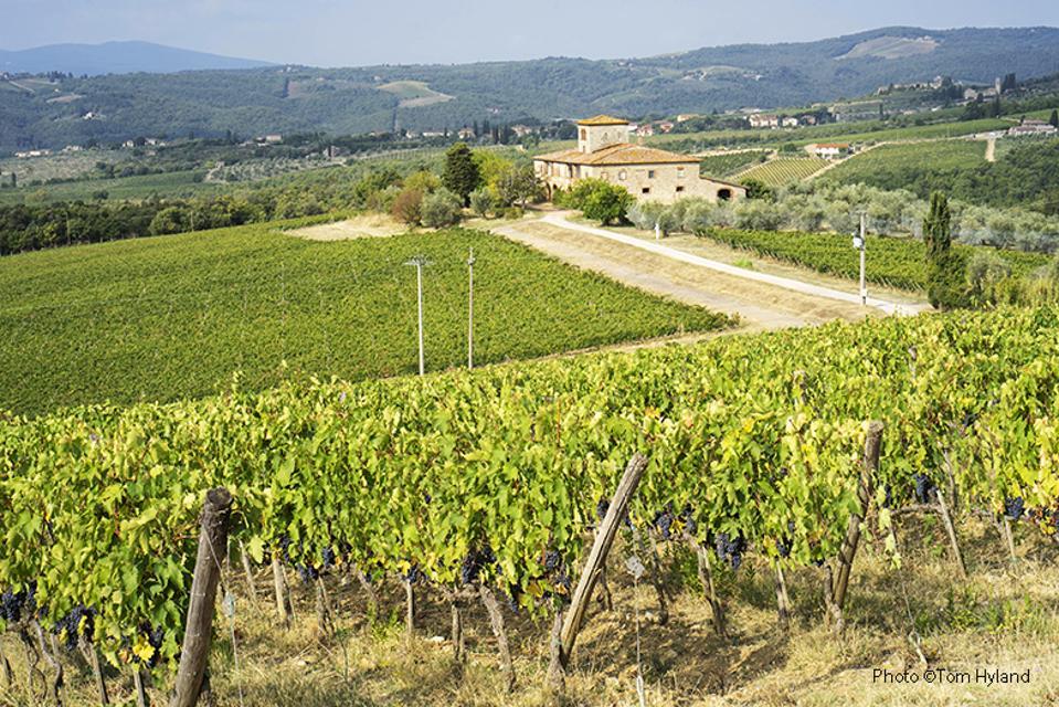 Brolio vineyards