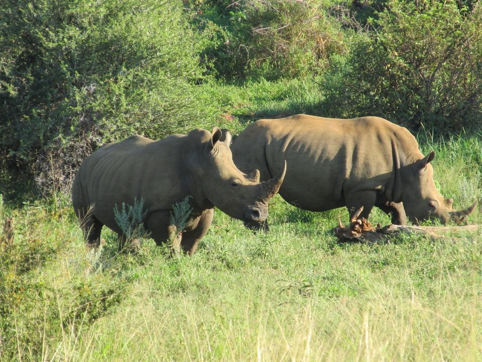 Madikwe Game Reserve, South Africa
