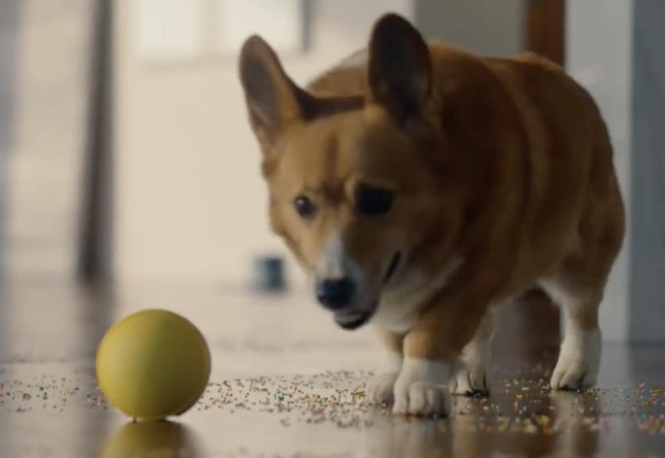 Samsung's Ballie instructing Roomba to clean up Corgi's mess at CES 2020