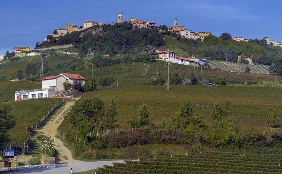 Settimo vineyards
