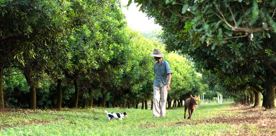 Jindilli, the name of milkadamia's macadamia farm that practices regenerative agriculture.