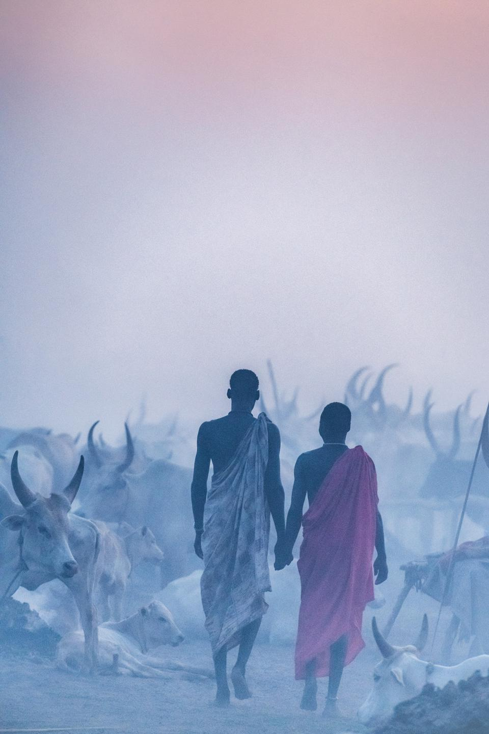 Young tribesmen and their cattle under pink dessert light
