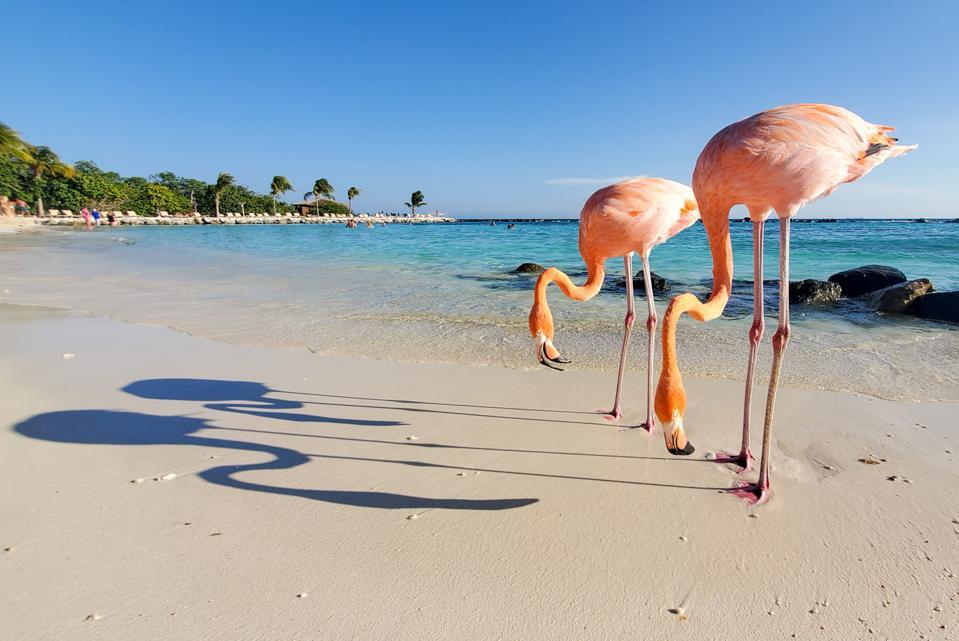 Flamingos and their shadows in the beach, Smart Shot