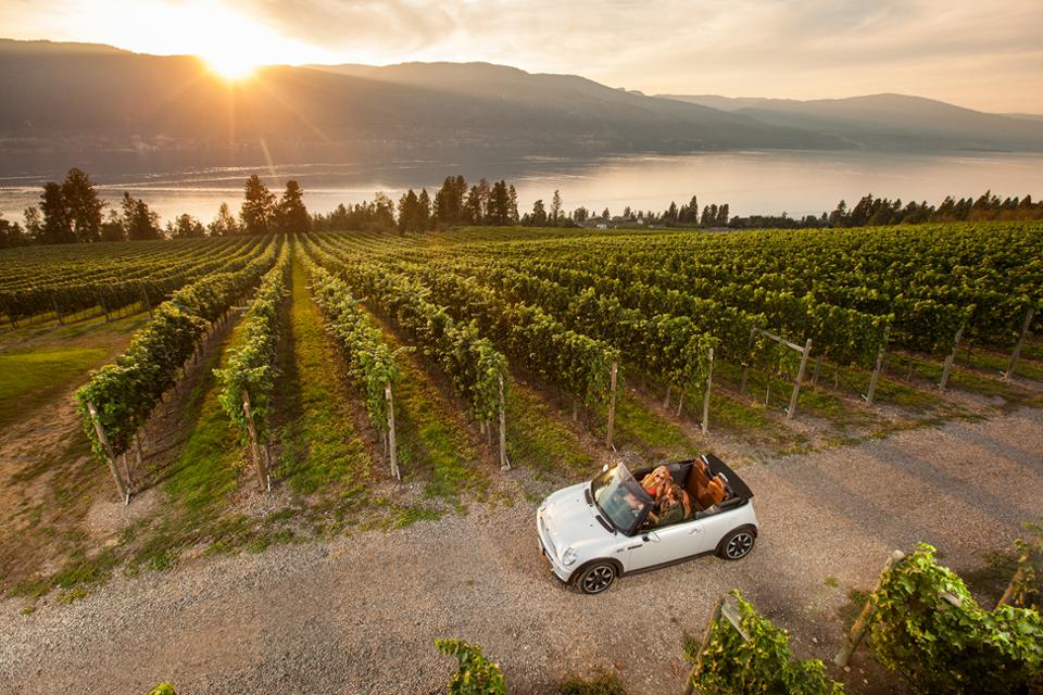 Take A Wine Tour Around Kelowna, Even If You Know Nothing About Wine