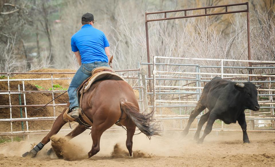 Z Boots Take The Heat For Rodeo Horses, Says Entrepreneur Inventor