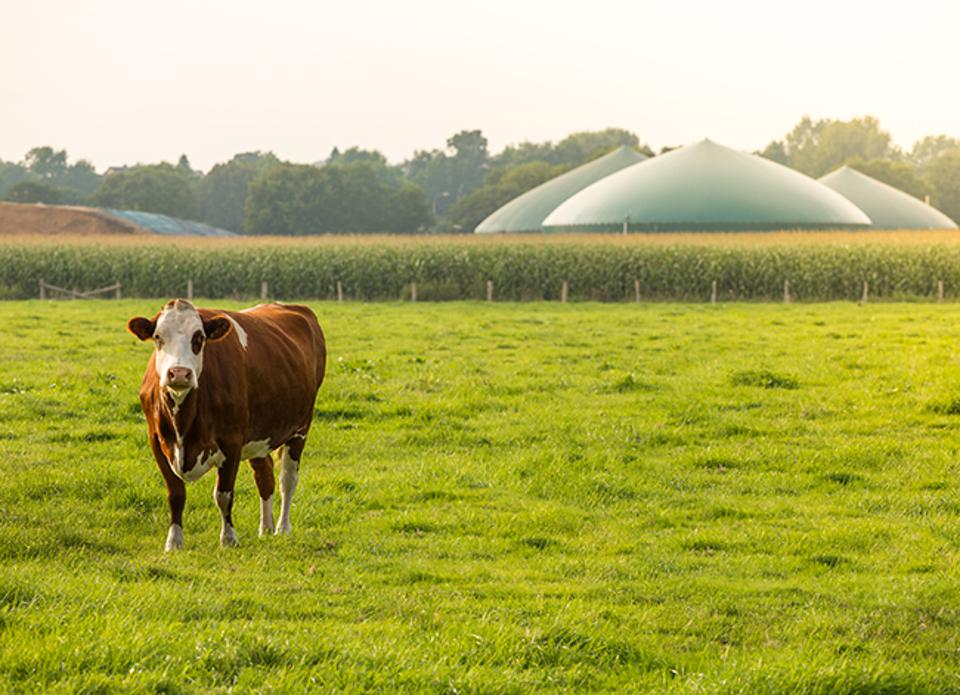 Manure that is converted into renewable natural gas will help SoCalGas reduce its carbon footprint.