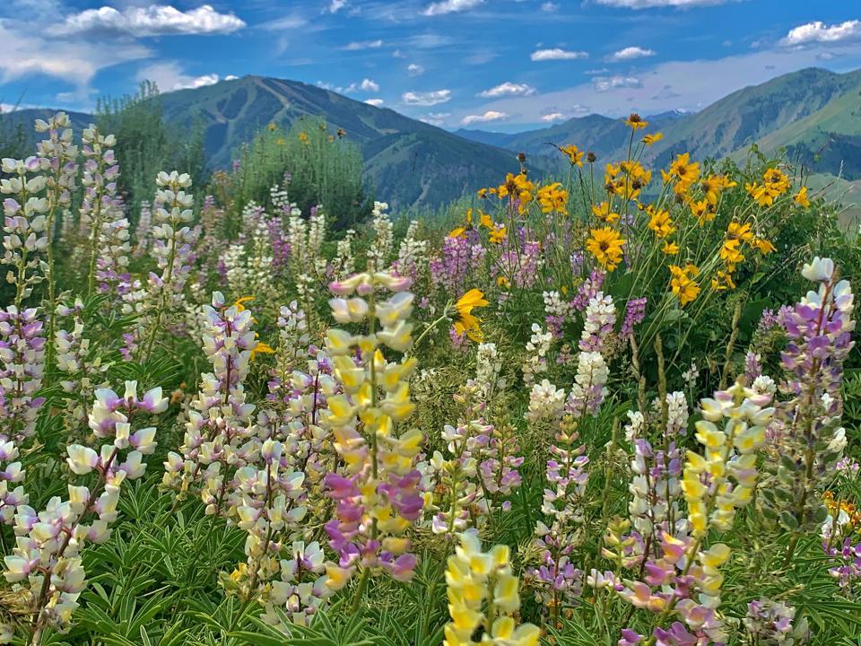 flowers on Proctor Mountain