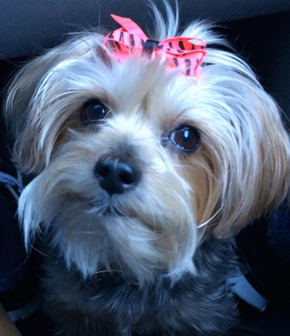 Tiffany Williams' dog Prada.