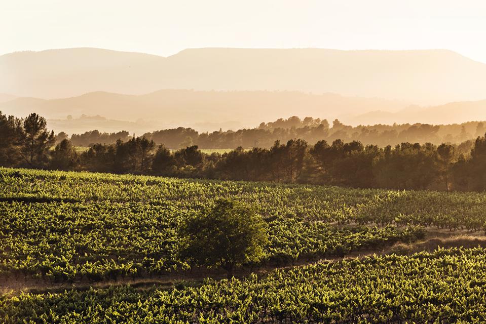 Recaredo biodynamic vineyards