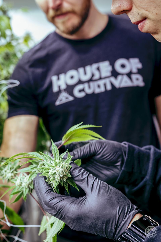 House of Cultivar, organic cannabis, Cannabis Certification Council, Organically Grown