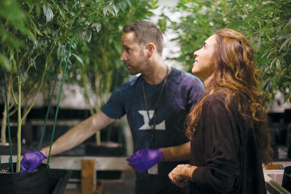 L'Eagle, organic cannabis, Cannabis Certification Council, Amy Andrle, Denver dispensaries
