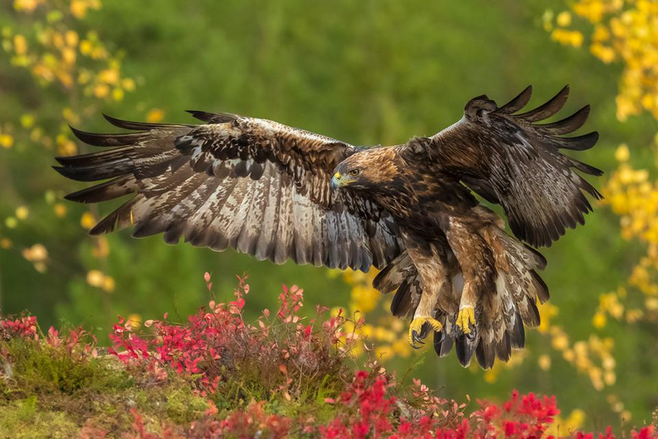 Beautiful Eagle , Bird Photographer Of The Year