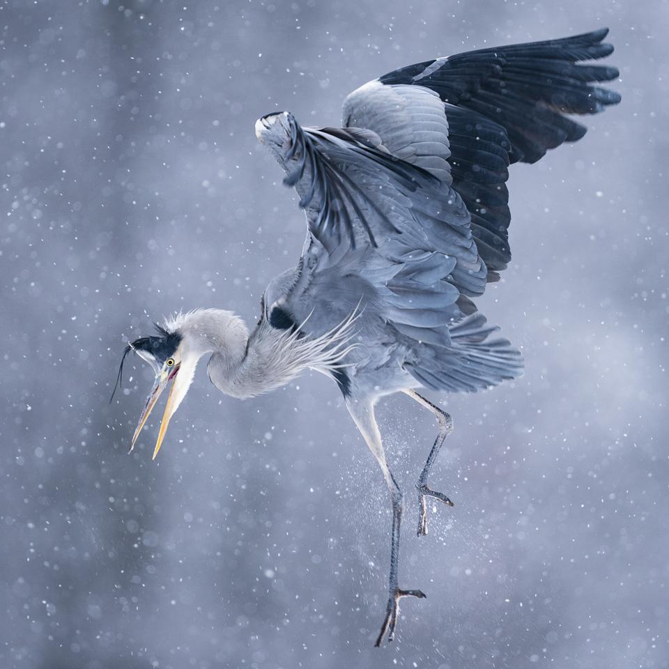 Beautiful Bird, Bird Photographer Of The Year