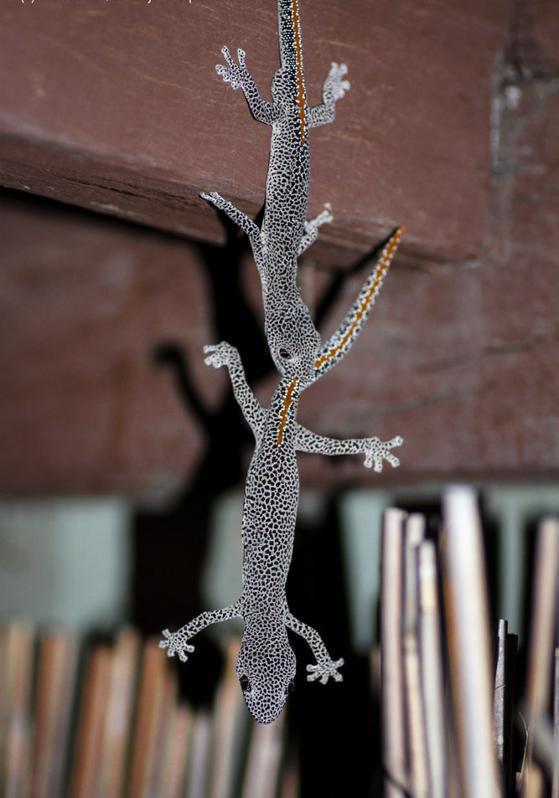 Humorous salamanders