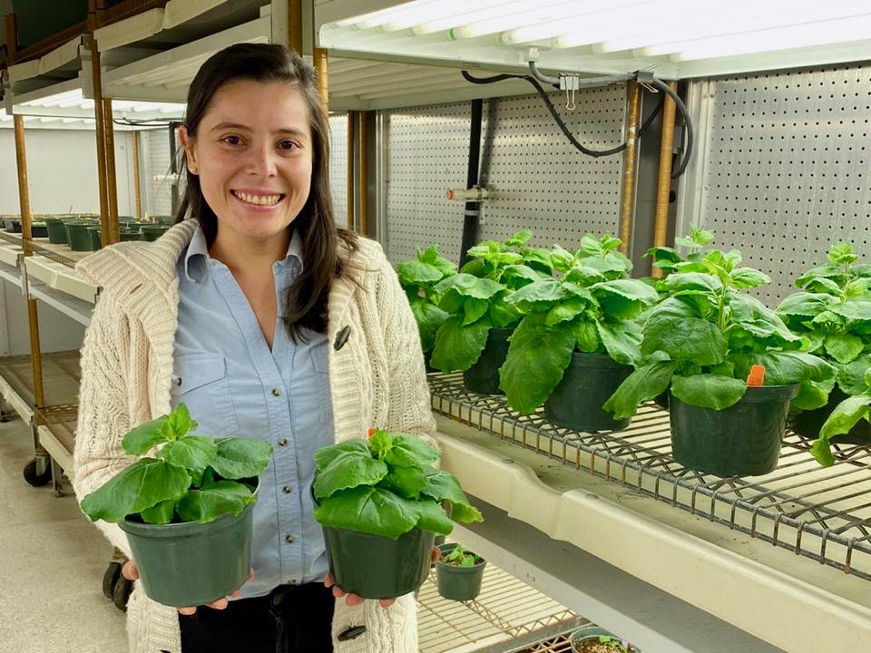 Colombian plant pathologist Carolina Mazo-Molina in a growth chamber at the Boyce Thompson Institute (BTI) at Cornell University in Ithaca, New York.
