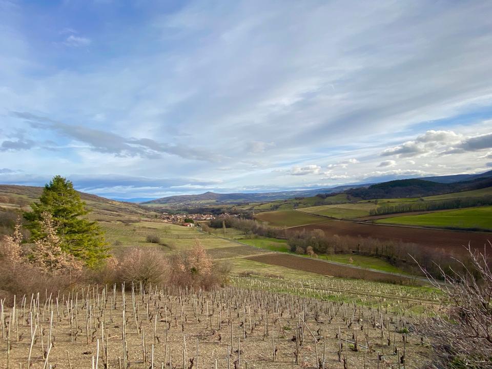 Vineyard near Boudes