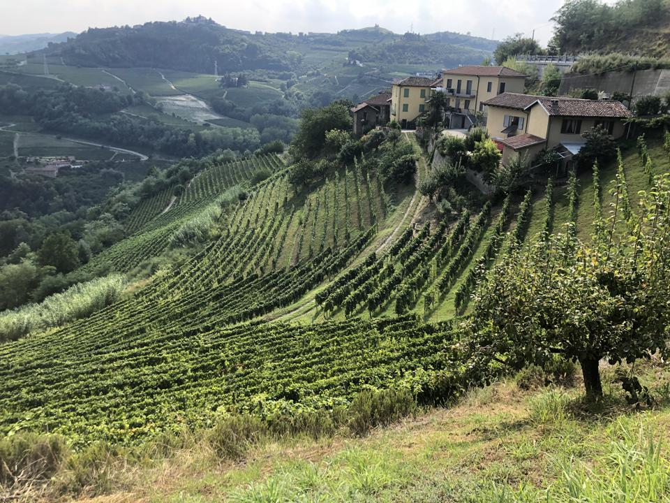 The Moscato Bianco vineyards of Santo Stefano Belbo, a top growing zone in the Asti DOCG.