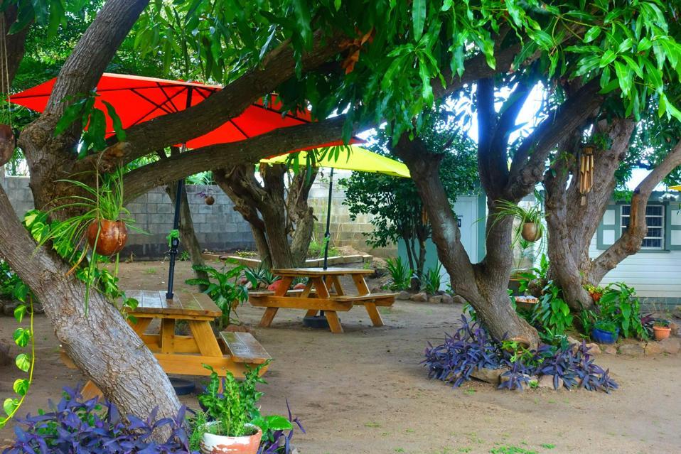 MangoLand Cafe