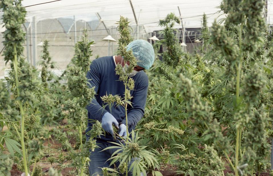 This Week's Top Cannabis News: Turbulence, Firings, Job Creation, And Loads Of Cash