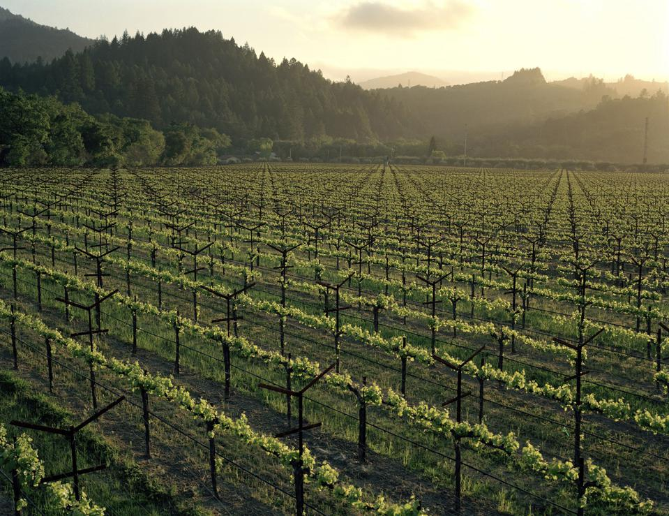 Spottswoode Vineyard