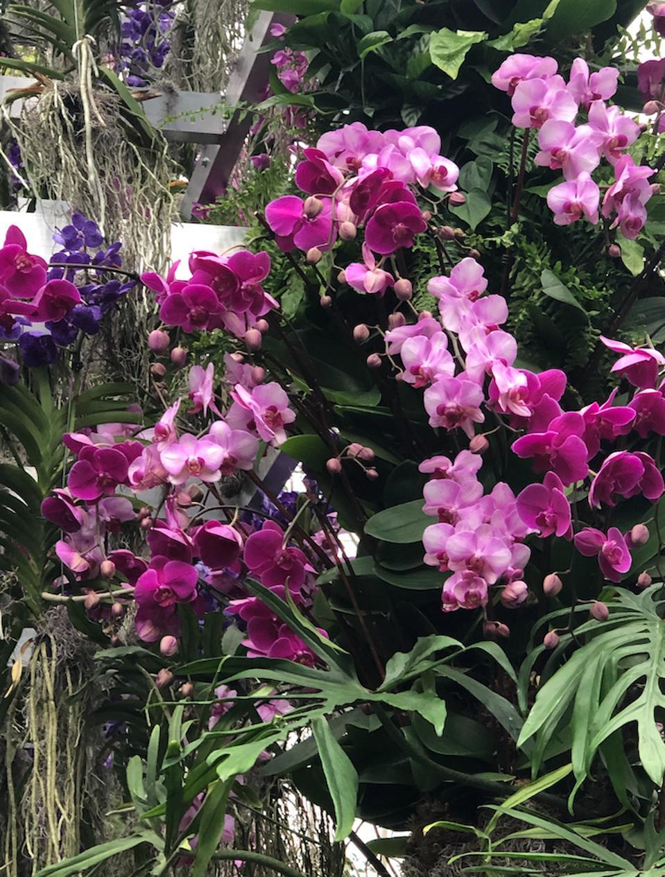 NYB= Botanical Garden orchid