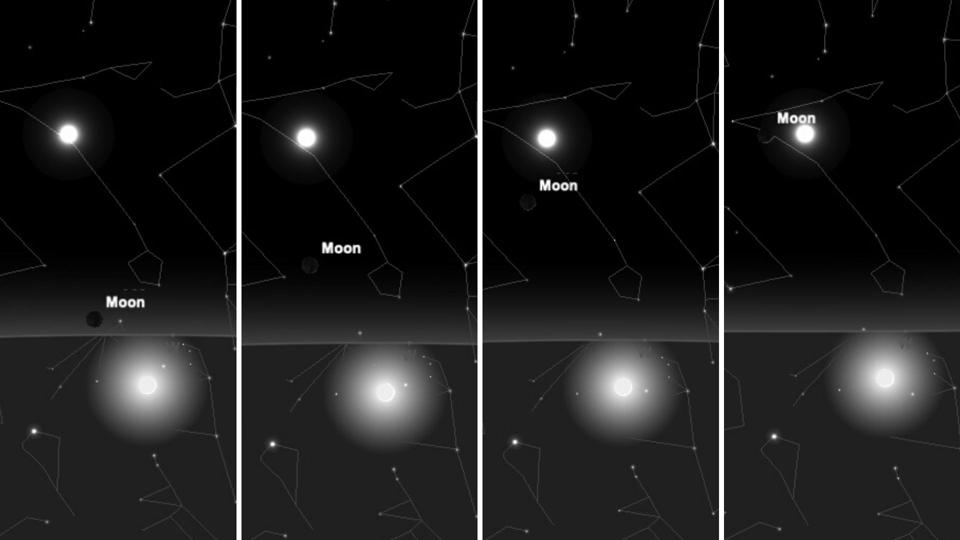 The position of the young moon this week, from Monday (far left) through Thursday (far right.