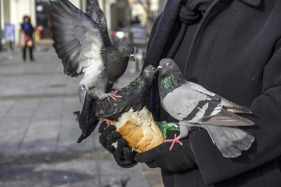 bird in the hand, customer retention
