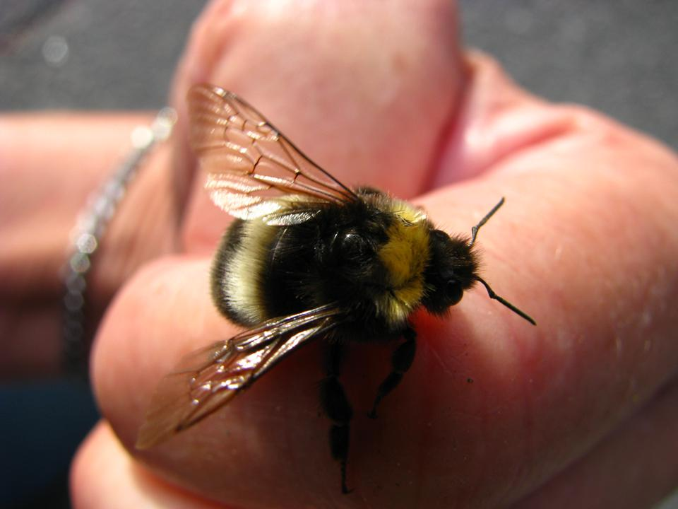 BumblebeeHandGrrlScientist