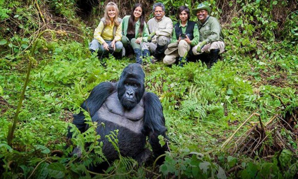 An Insider's Guide To Visiting Gorillas In Africa