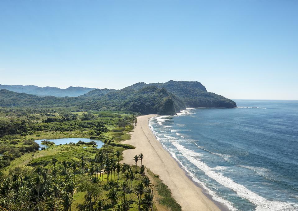 Mandarina jungle landscape