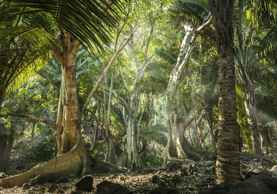 Ancient tropical forests