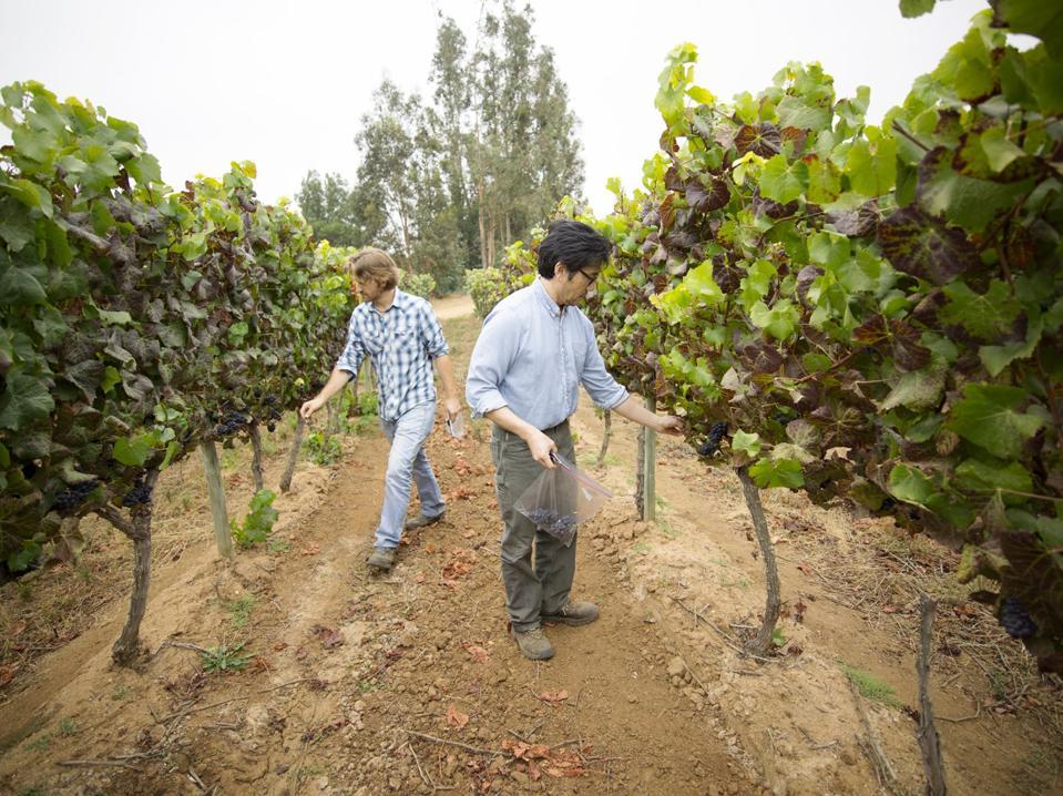 Kingston Family Vineyards winemakers Byron Kosuge and Amael Orrego.