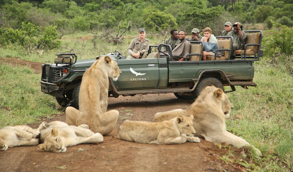 Phinda Private Game Reserve  eco safari