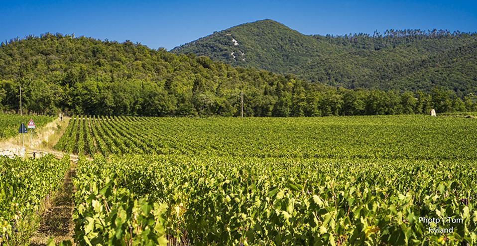 San Felice vineyards, Castelnuovo Berardenga, Chianti Classico