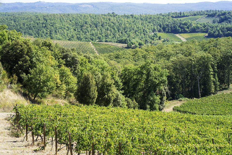 Vineyards of Fèlsina, Castelnuovo Beradenga, Chianti Classico