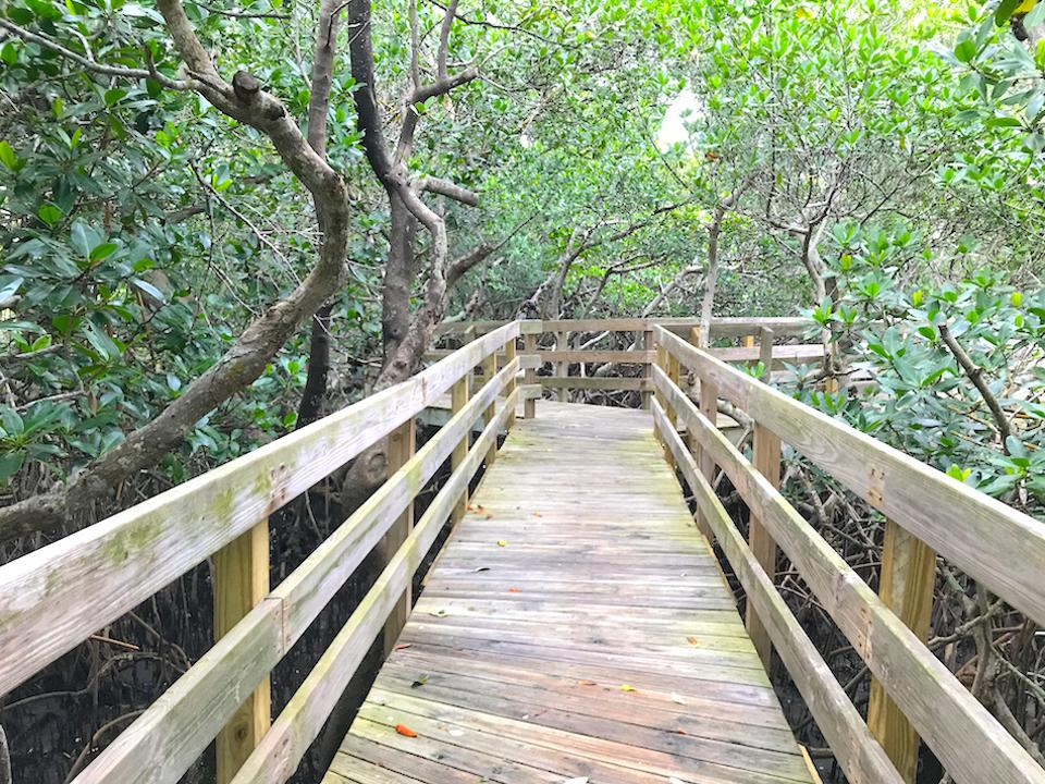 nature walk at Leffis Key, Florida