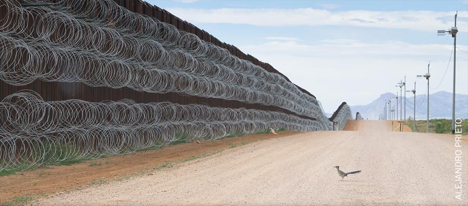 Roadrunner approaching the border wall