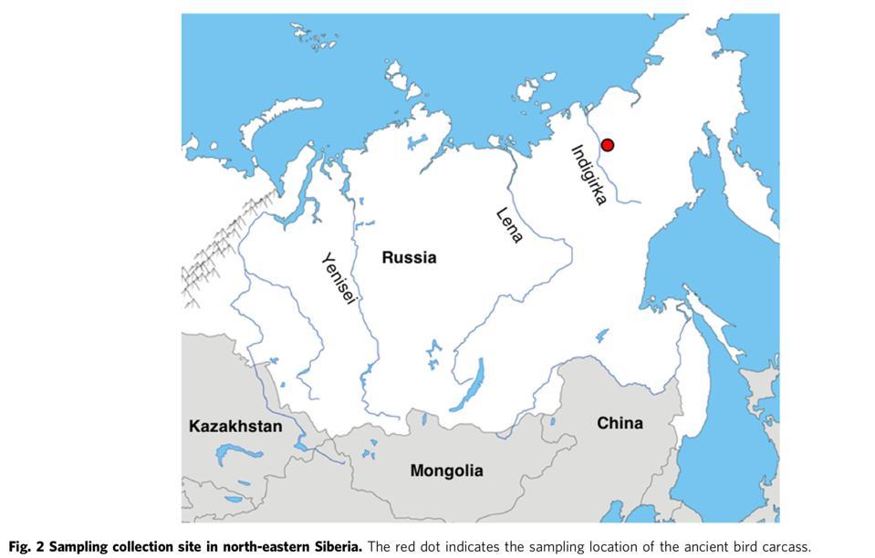 46ka frozen bird siberia map