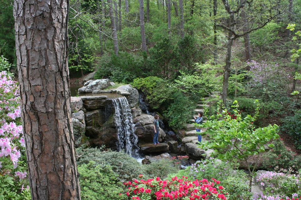 Jardins de Garvan Woodland. Université d'Arkansas. Jardins botaniques Sources chaudes.