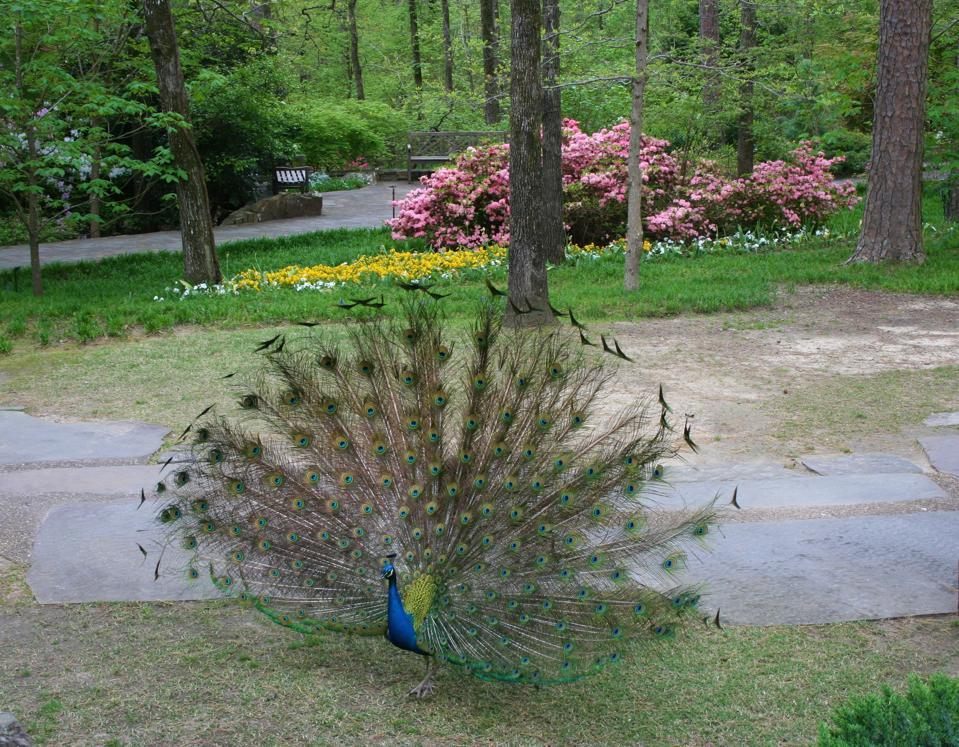 Jardins de Garvan Woodland. Sources chaudes. Université d'Arkansas.