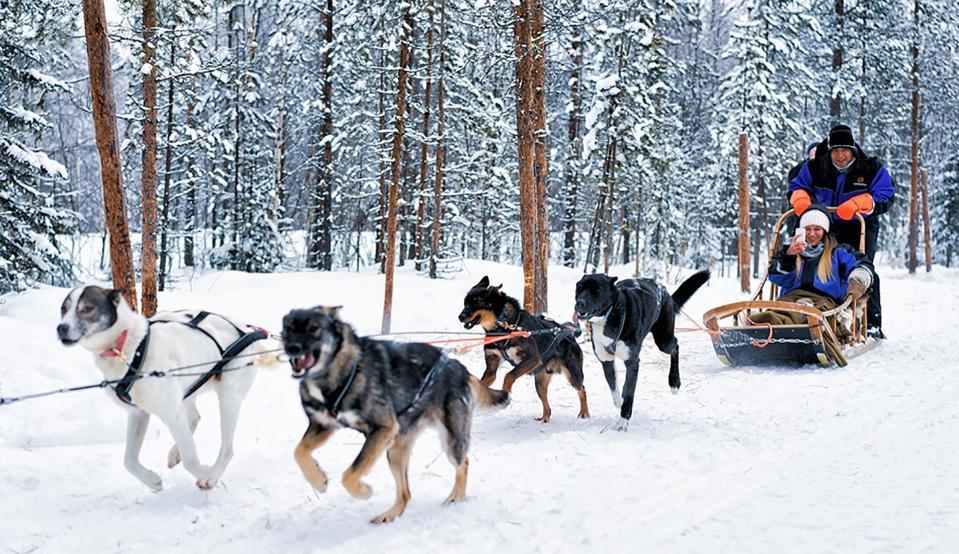 Dogsledding in Quebec