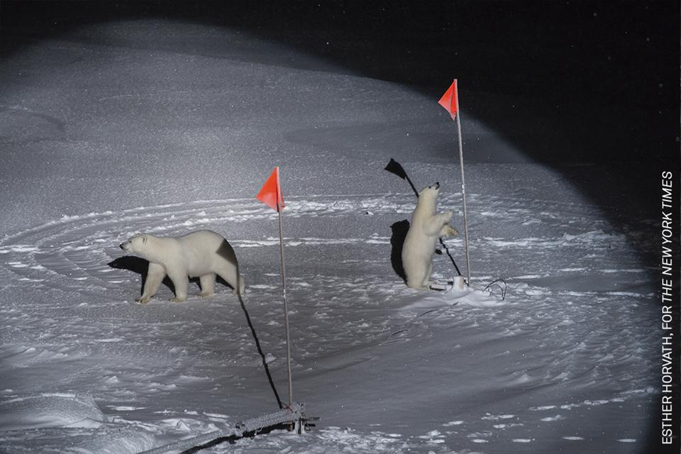 Polar bear and cubs discovering scientific equipment in the artic