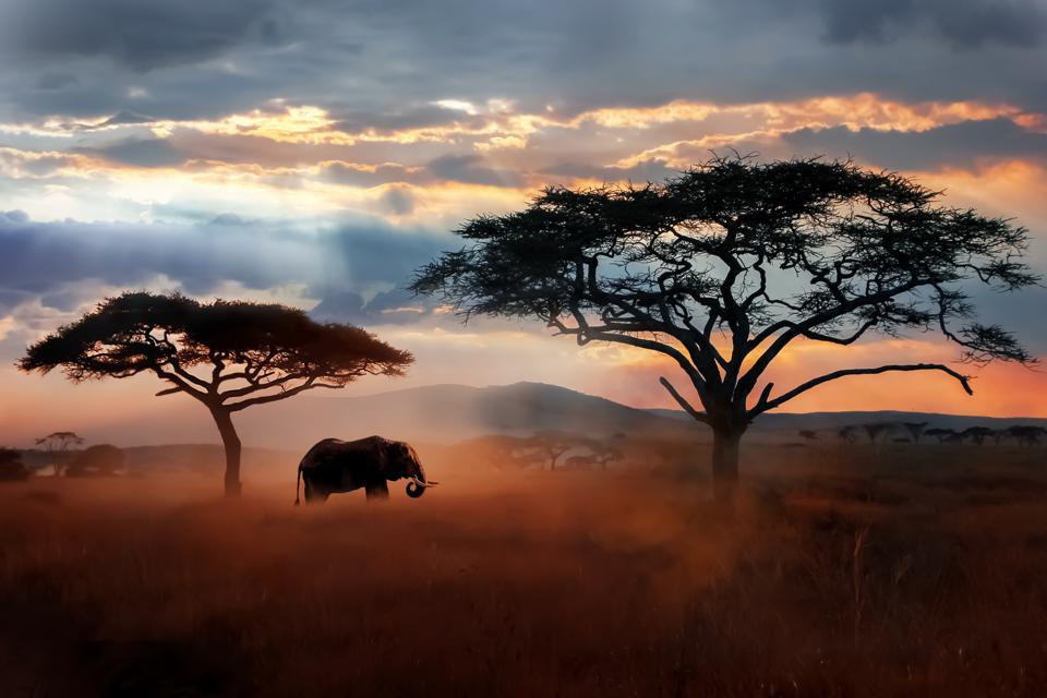 Wild African elephant in the savannah. Serengeti National Park. Wildlife of Tanzania. African landscape.
