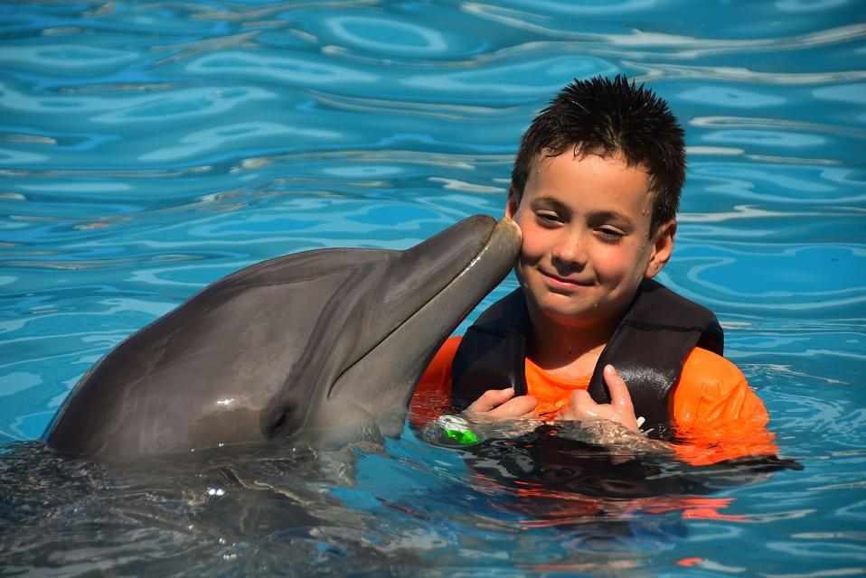 dolphin kissing a boy